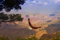拉斯维加斯出发大峡谷1日游:LV1-7032
