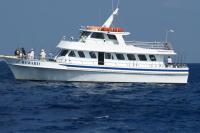 迈阿密出发游船观光1日游:MI-T-7189