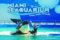 迈阿密出发景点门票1日游:MI-T-7180