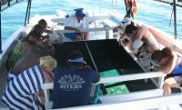 夏威夷大岛出发游船观光1日游:HO-T-333