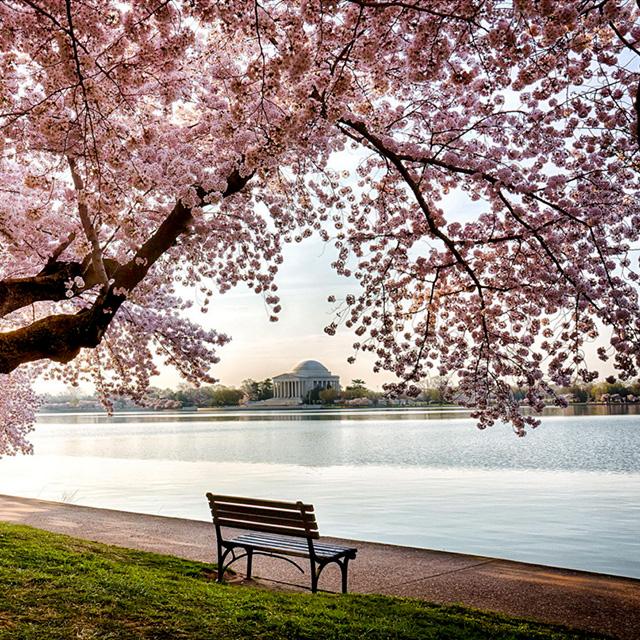 波士顿出发华盛顿樱花节3日游:BO3-418