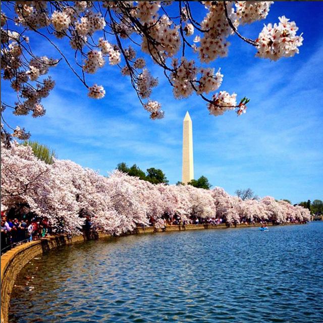 波士顿出发华盛顿樱花节、尼亚加拉大瀑布6日游:BO6-2785