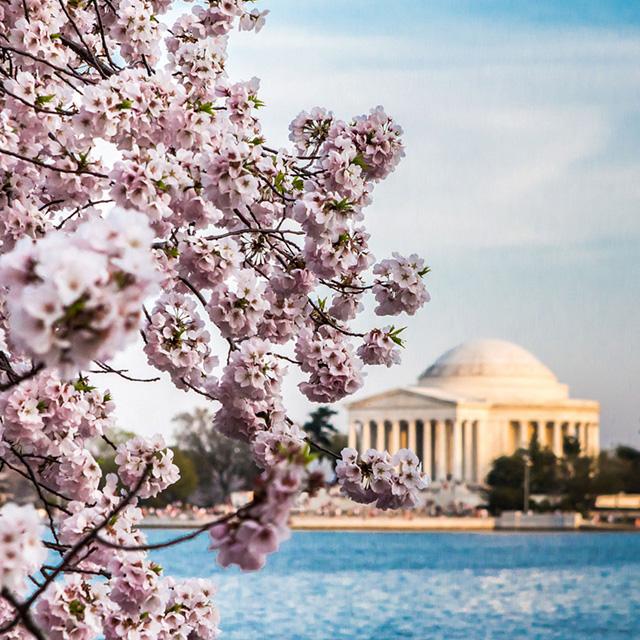 华盛顿出发3日游:DC3-2528