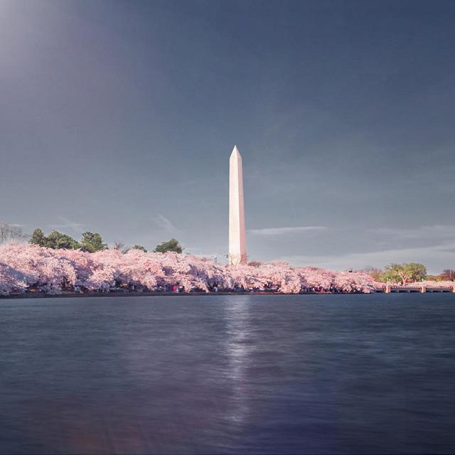 多伦多出发华盛顿樱花节3日游:TO3-5780
