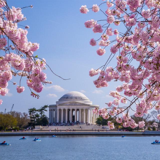 纽约出发华盛顿樱花节、春假旅游2日游:NY2-857