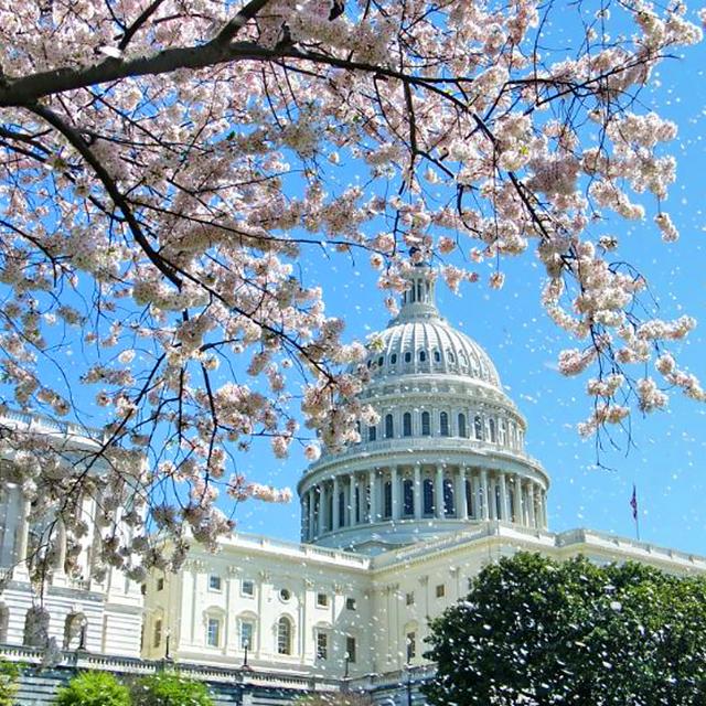 纽约出发华盛顿樱花节、春假旅游2日游:NY2-858