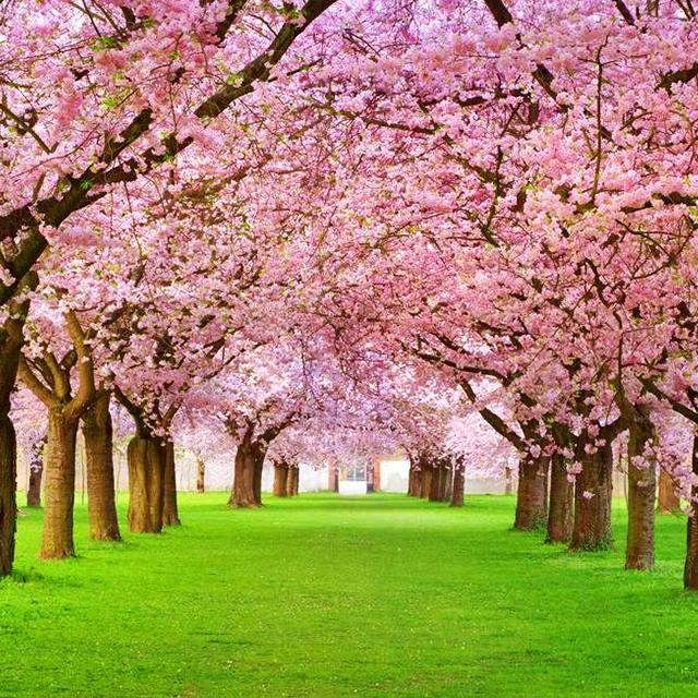 纽约出发华盛顿樱花节、春假旅游2日游:NY2-865