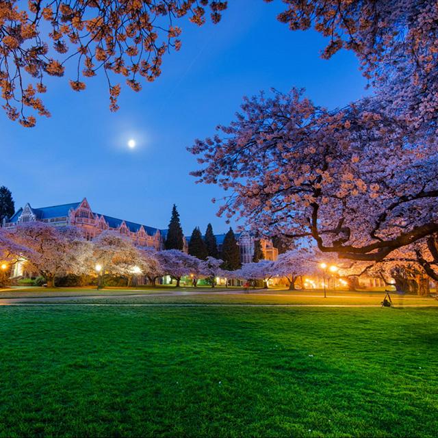 纽约出发华盛顿樱花节、春假旅游2日游:NY2-866