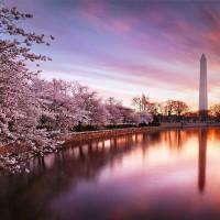 纽约出发华盛顿樱花节2日游:NY2-9