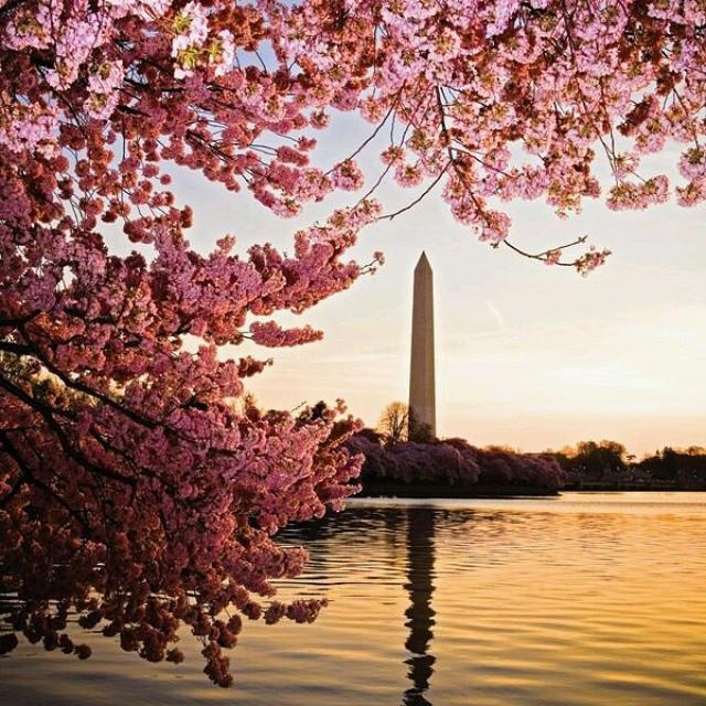 纽约出发华盛顿樱花节4日游:NY4-20
