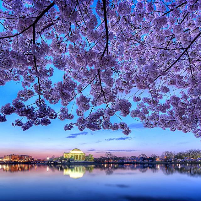 纽约出发华盛顿樱花节5日游:NY5-85