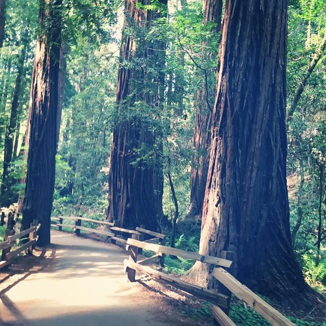 旧金山出发大峡谷、黄石公园12日游:SF12-1827