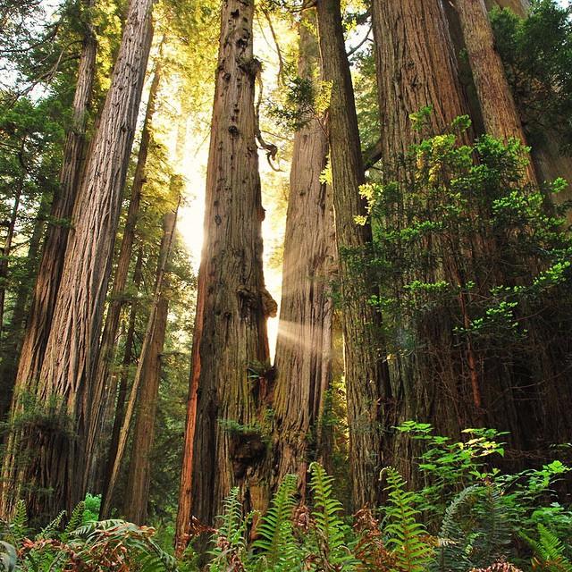 旧金山出发大峡谷、黄石公园、优胜美地12日游:SF12-1834