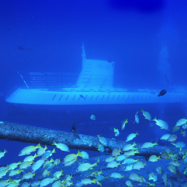 茂宜岛出发游船观光1日游:HO-T-1016