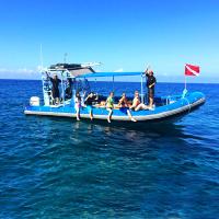 夏威夷大岛出发游船观光1日游:HO-T-1024