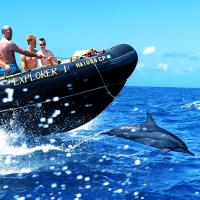 夏威夷大岛出发游船观光1日游:HO-T-1047
