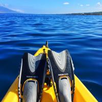 夏威夷大岛出发游船观光1日游:HO-T-1113
