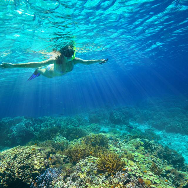 茂宜岛出发游船观光1日游:HO-T-1165