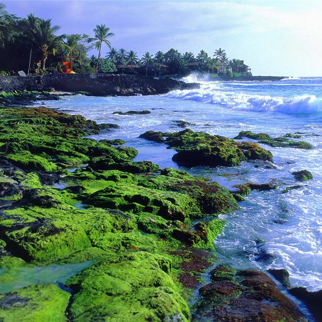 夏威夷大岛出发1日游:HO-T-2992
