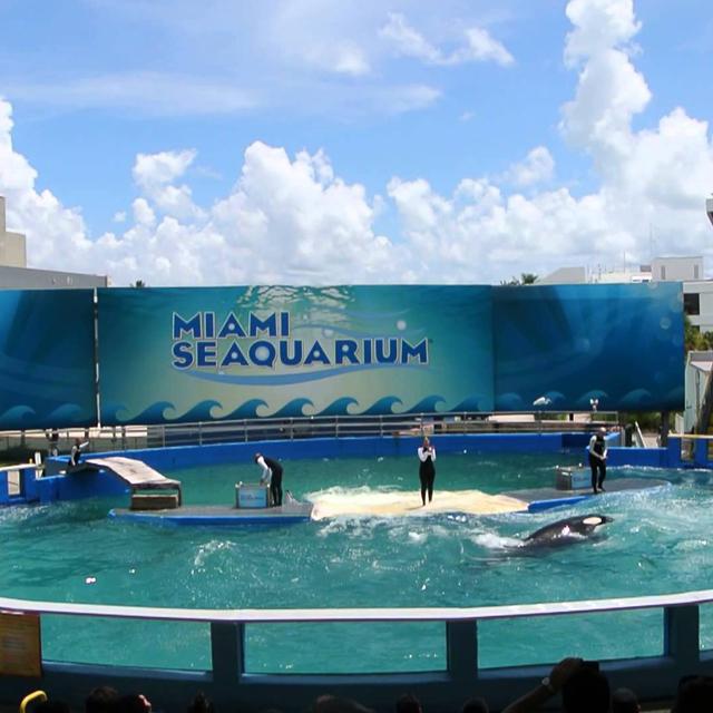迈阿密出发景点门票1日游:MI-T-4463