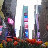 纽约出发购物1日游:NY1-2717