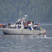 维多利亚出发游船观光1日游:VC-T-3184