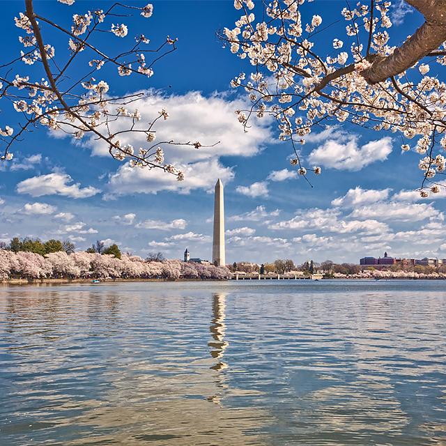 纽约出发华盛顿樱花节、春假旅游1日游:NY1-631