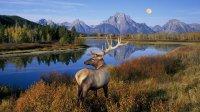 西雅图出发黄石公园8日游:SE8-10356