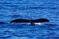 檀香山出发游船观光1日游:HO-T-10961
