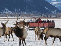 盐湖城出发黄石公园、舒适小团、冬季黄石5日游:SL5-11001