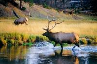 盐湖城出发黄石公园、羚羊谷4日游:SL4-11034
