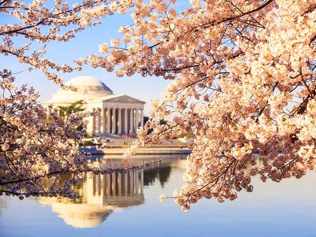波士顿出发华盛顿樱花节3日游:BO3-1112
