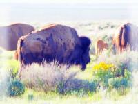 拉斯维加斯出发黄石公园、羚羊谷5日游:LV5-198