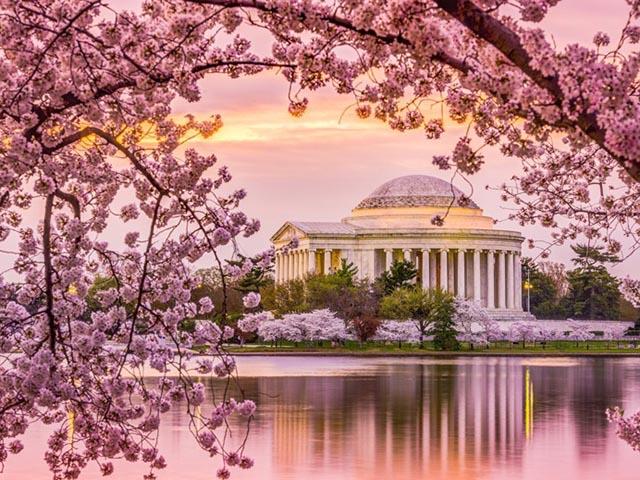 波士顿出发华盛顿樱花节3日游:BO3-208