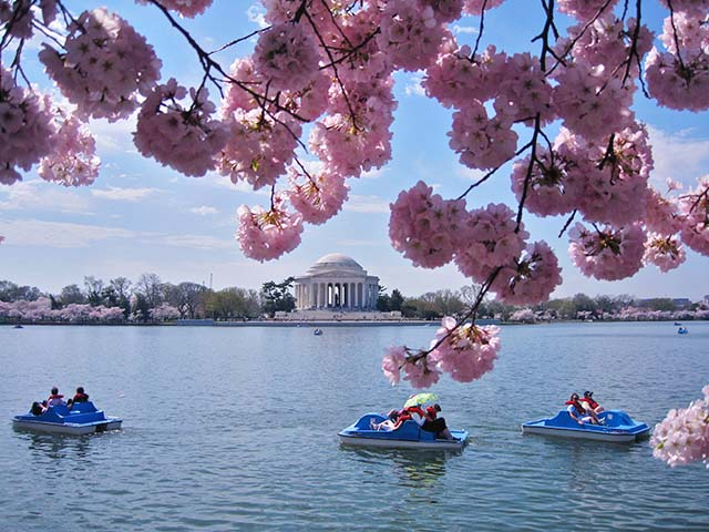 费城出发华盛顿樱花节、春假旅游4日游:PH4-9166