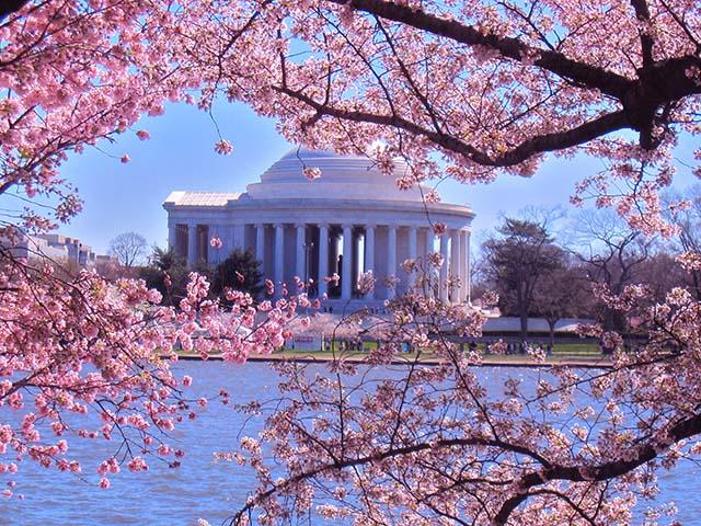 纽约出发华盛顿樱花节、春假旅游2日游:NY2-855